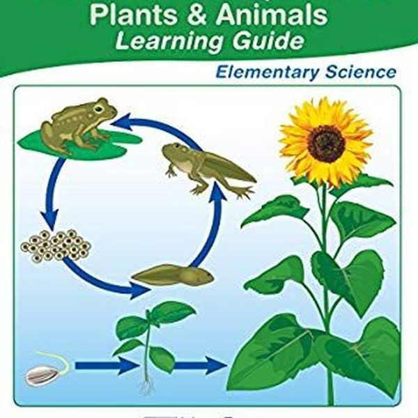 Plants And Animals Essay Examples