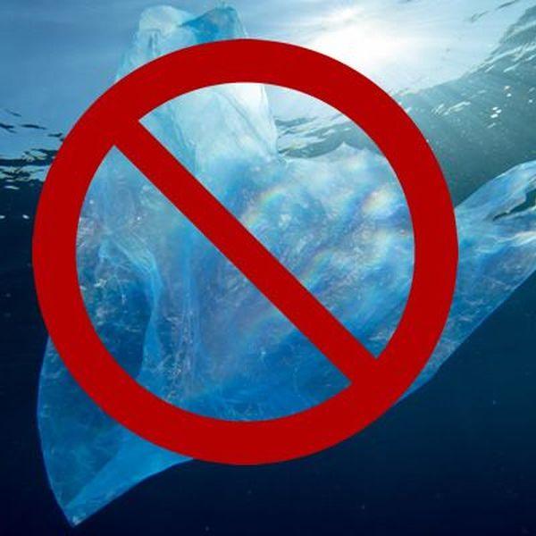 Plastics Should Be Banned Essay Examples