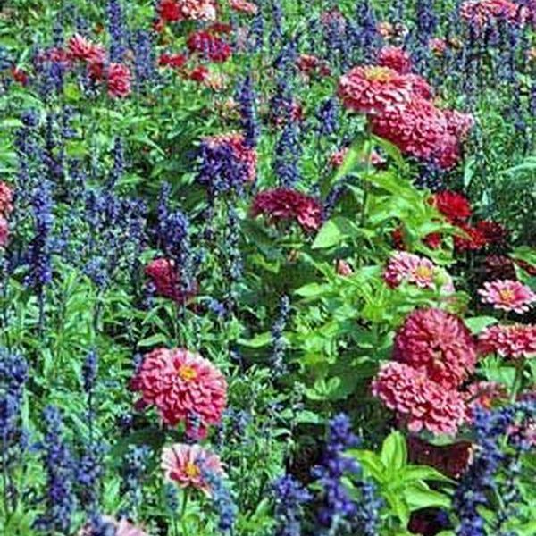 Pleasure Of Gardening Essay Examples
