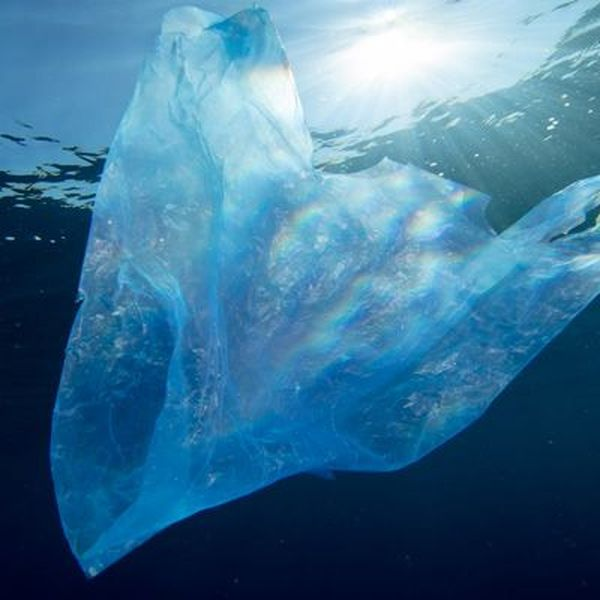 Polythene Bags Should Be Banned Essay Examples