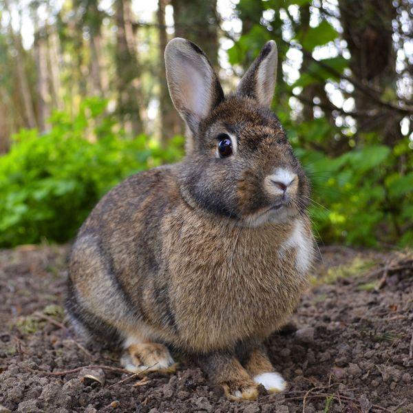 Rabbit Essay Examples