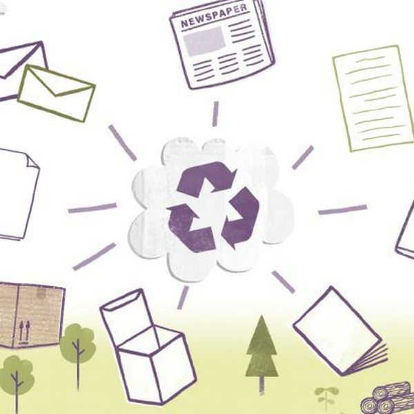 Recycling Of Paper Essay Examples