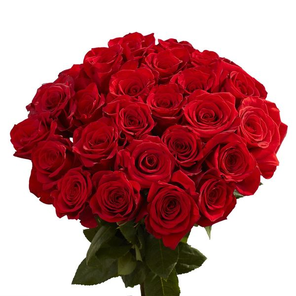 Red Rose Flower Essay Examples