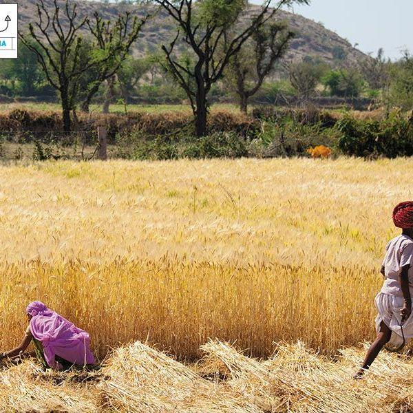 Rural India Essay Examples