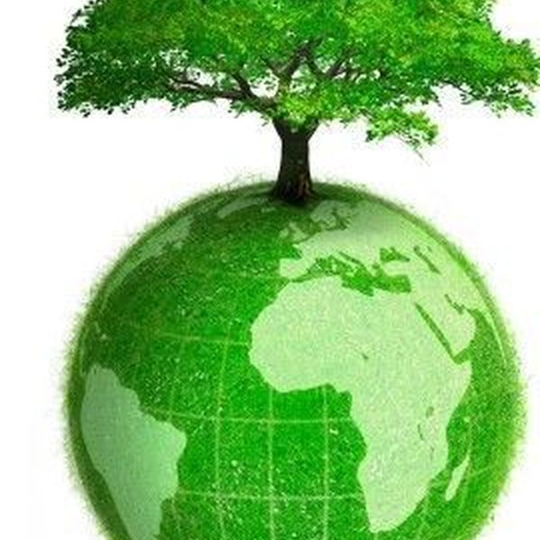 Save Trees For Green Earth Essay Examples