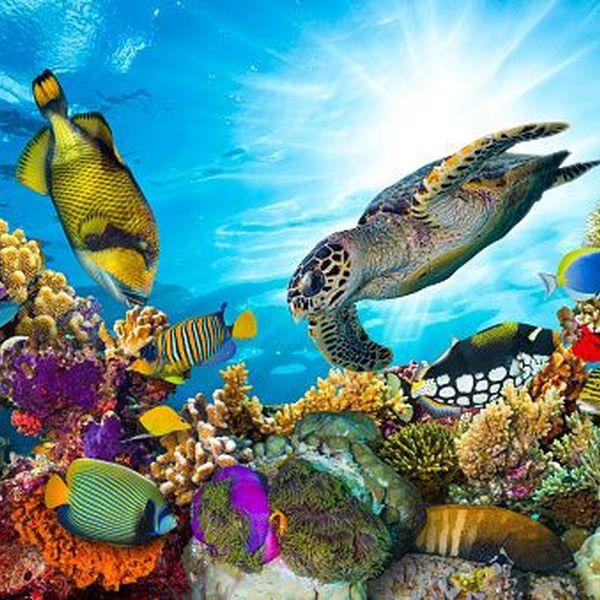 Saving Marine Life Essay Examples