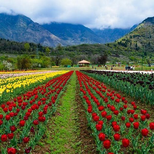 Scenic Beauty Of Kashmir Essay Examples
