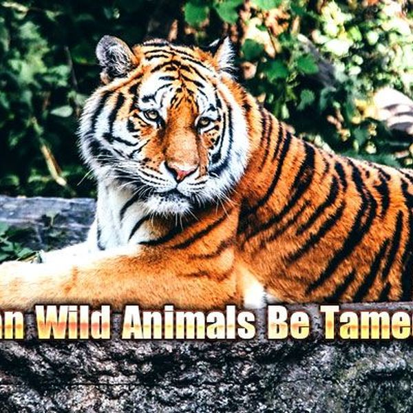 Should Animals Be Tamed Essay Examples