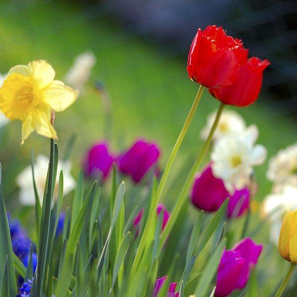 Spring Season Essay Examples