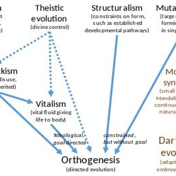 Structuralism Essay Examples