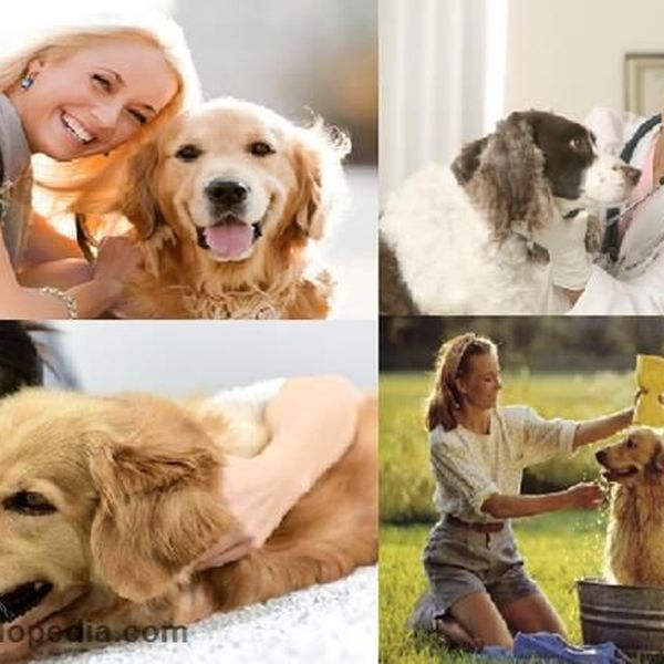 Taking Care Of Pet Animals Essay Examples