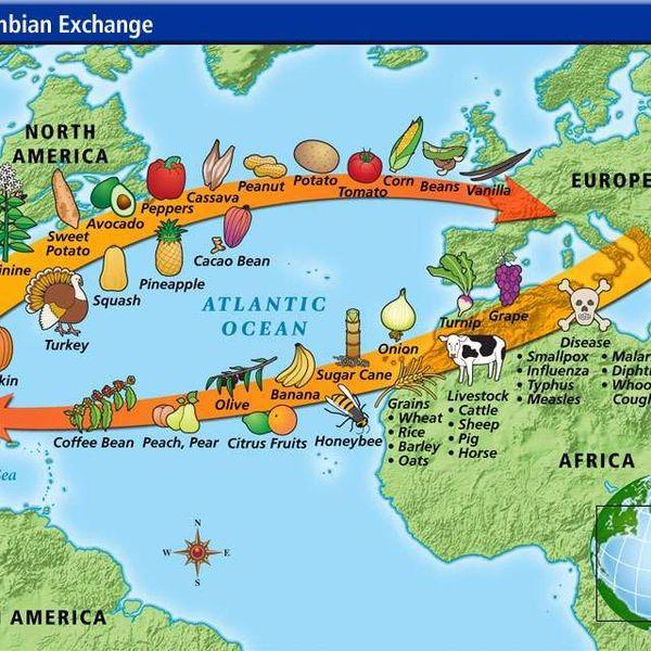 The Columbian Exchange Essay Examples
