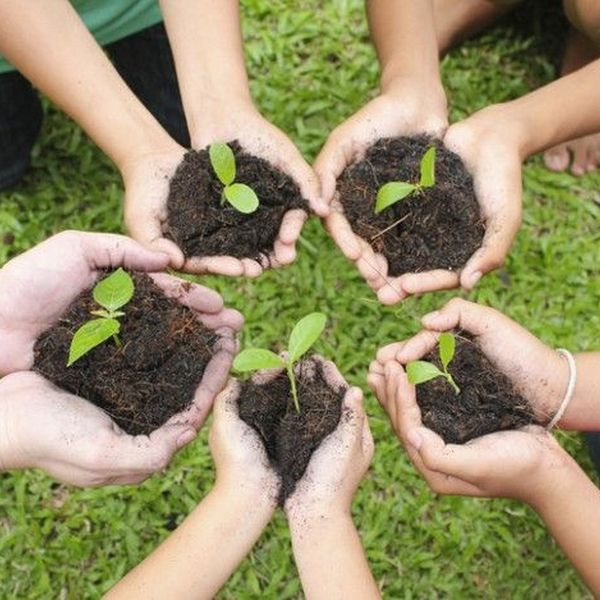 Tree Plantation Day Essay Examples