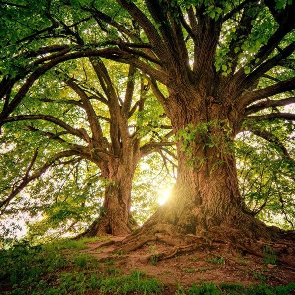 Trees And Environment Essay Examples