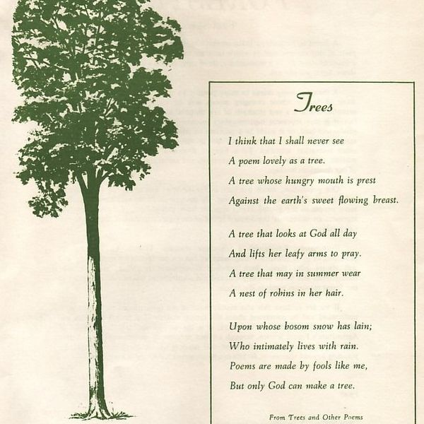 Trees In My Life Essay Examples