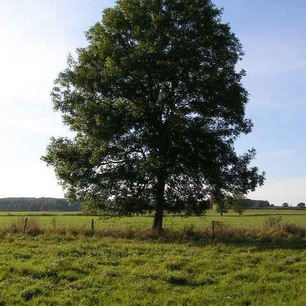 Trees Essay Examples