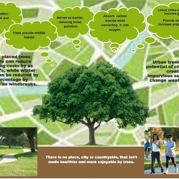 Value Of Trees Essay Examples