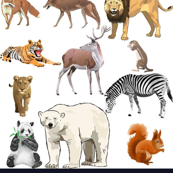 Wild Animals Essay Examples