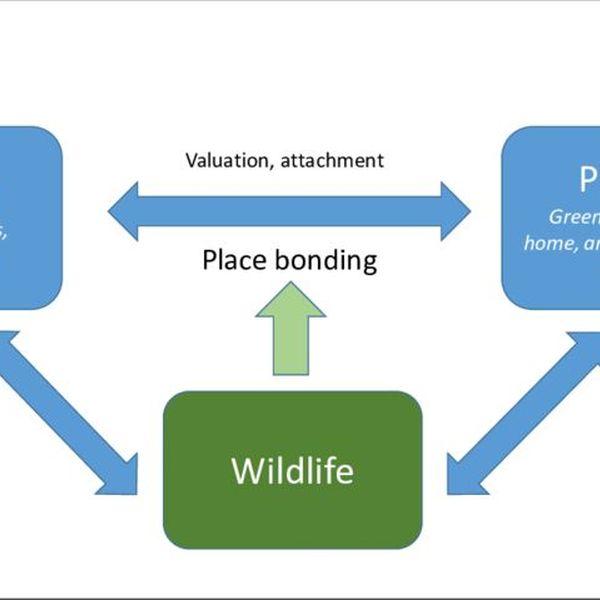 Wildlife Importance Essay Examples