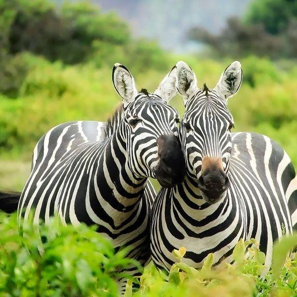 Wildlife Sanctuaries Essay Examples