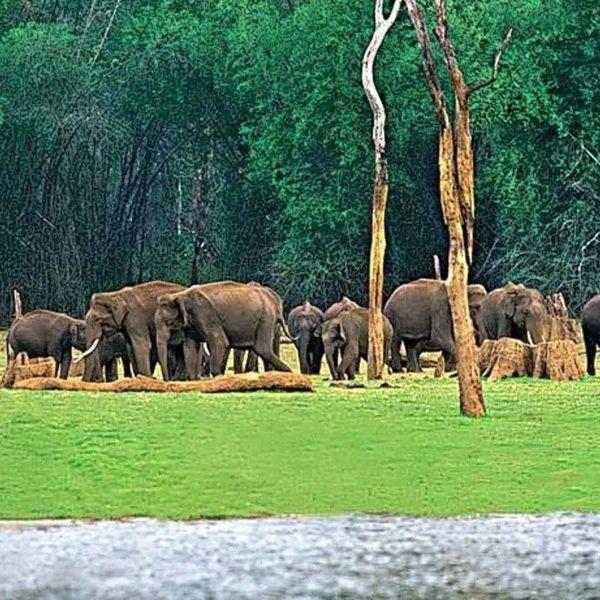 Wildlife Sanctuary Essay Examples