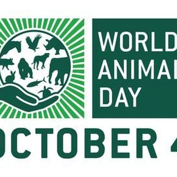 World Animal Day Essay Examples